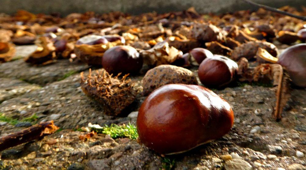 """Kastanien im Herbst - hier in der Region auch """"Keschte"""" genannt"""