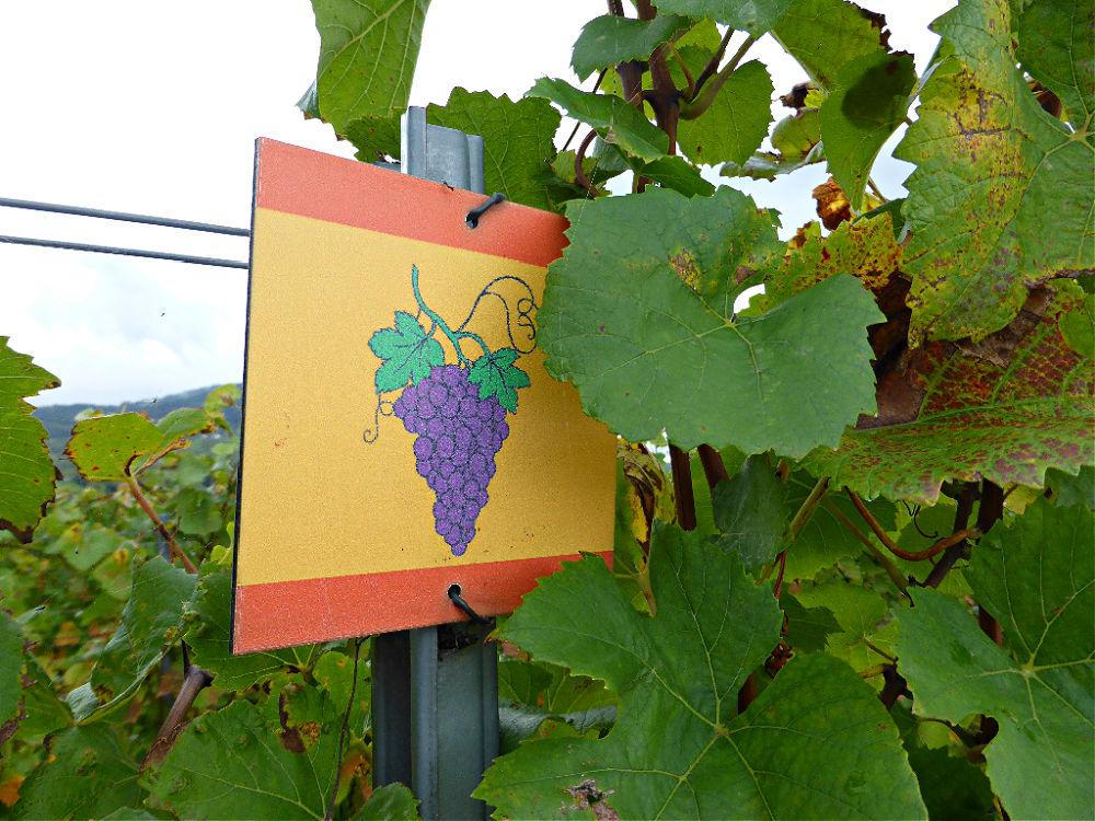 Unterwegs auf dem Rotweinpfad bei Bühl-Eisental