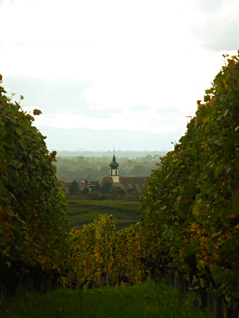 Blick von den Weinreben hinab ins Tal