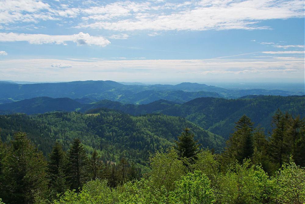 Blick von der Aussichtsplattform Steinmäuerle über den Schwarzwald