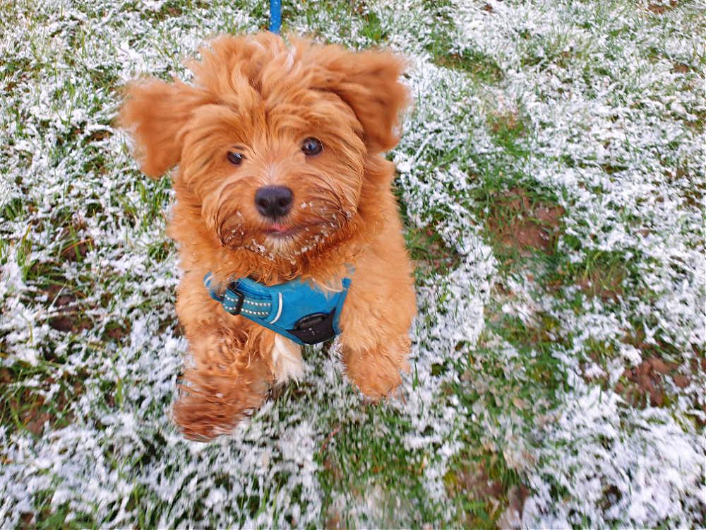 Tommy und der erste Schnee