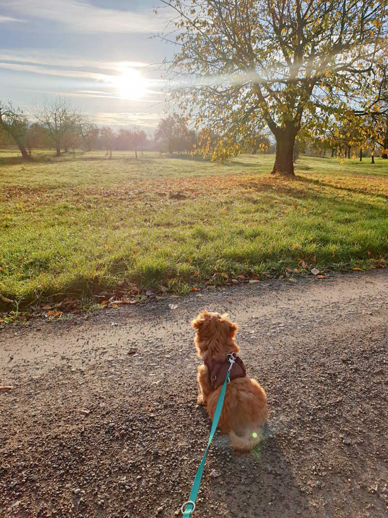 Tommy auf einem seiner ersten größeren Spaziergänge