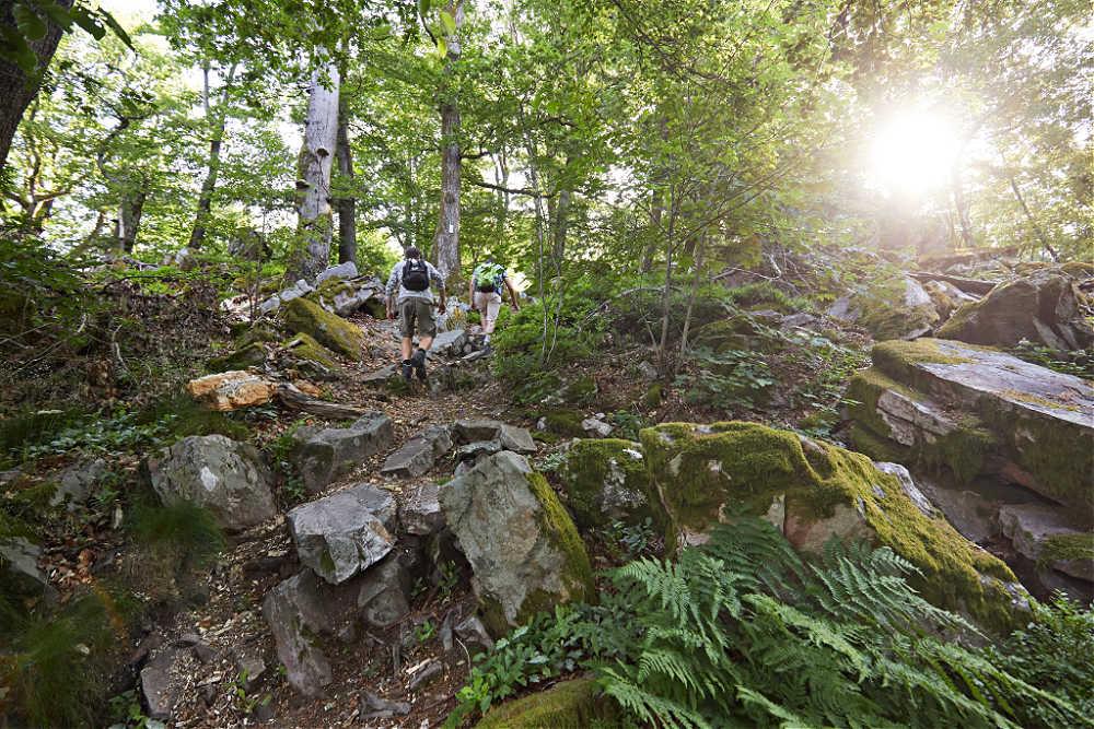 Wandern auf dem Keltischen Ringwall | © Marcus Gloger / Tourismus Zentrale Saarland