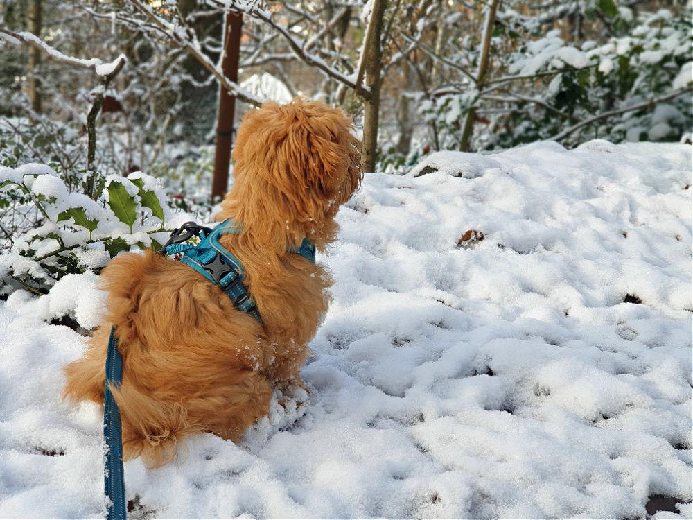 Spaziergang mit Hund auf dem Ettlinger Panoramaweg