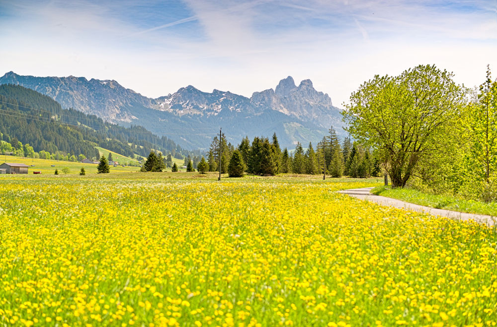 Frühling im Tannheimer Tal ©TVB Tannheimer Tal / Achim Meurer
