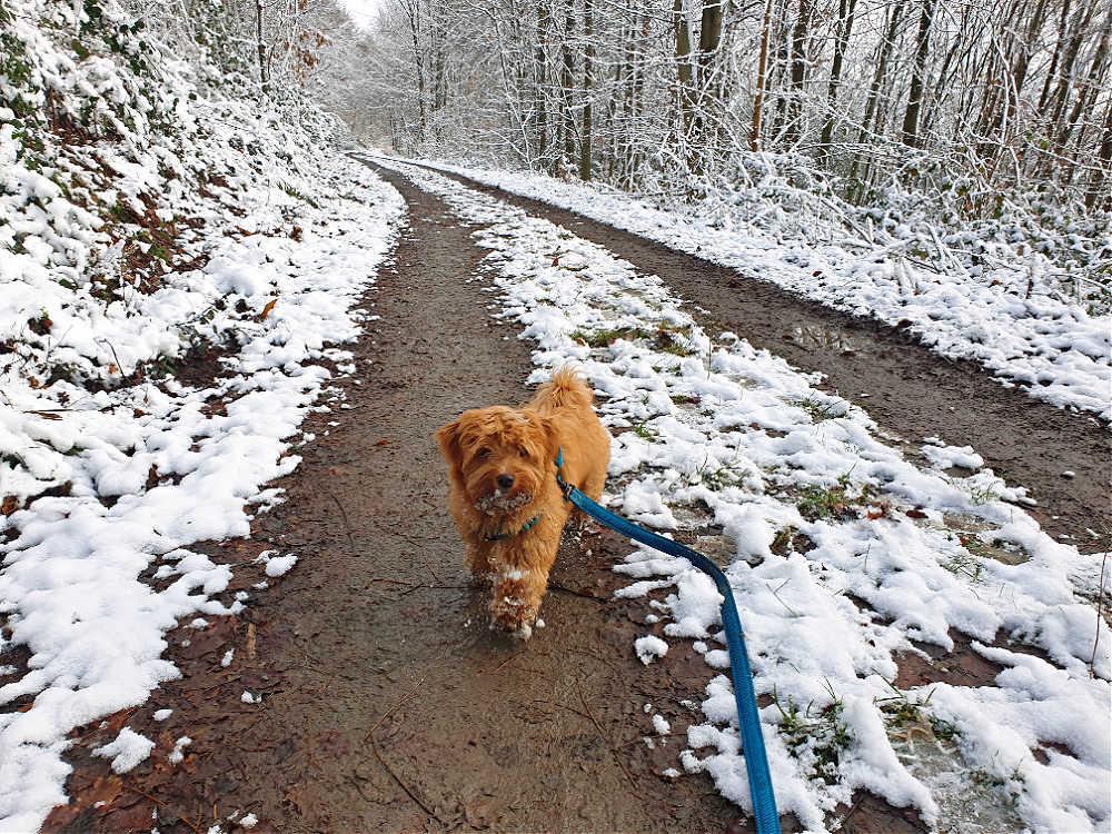 Winterwanderung mit Hund - Panoramaweg Ettlingen
