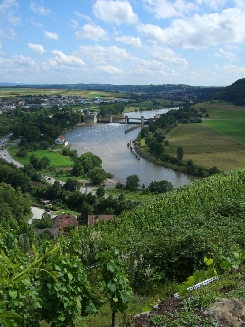 Weinberge in Gundelsheim am Neckar