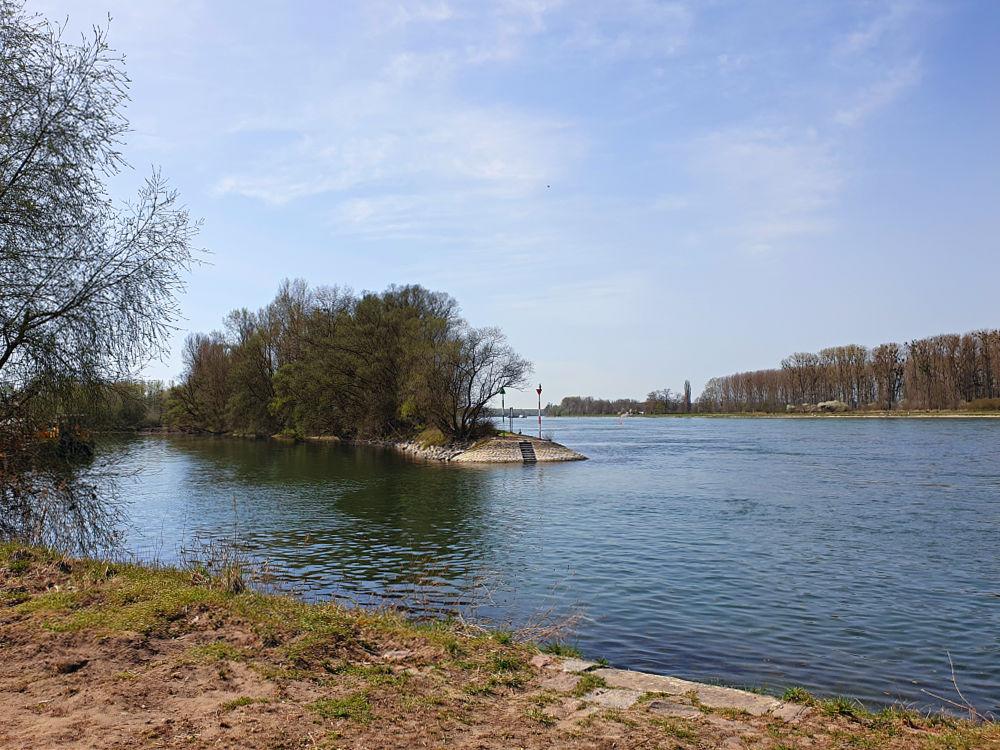 Der Rhein bei Neuburgweier
