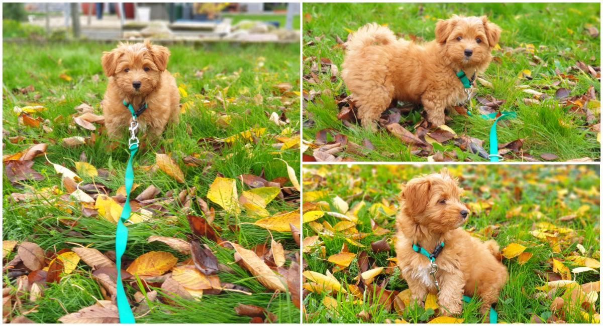 Spielen mit den Herbstblättern