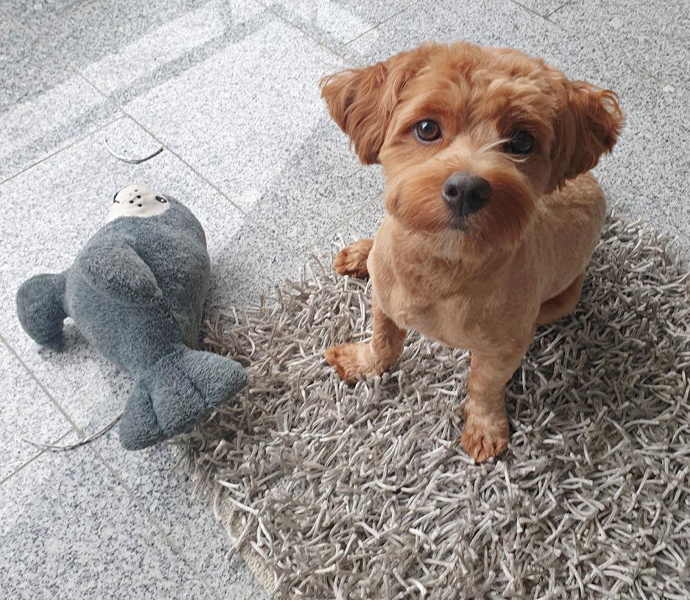 Tommy und sein Seehund